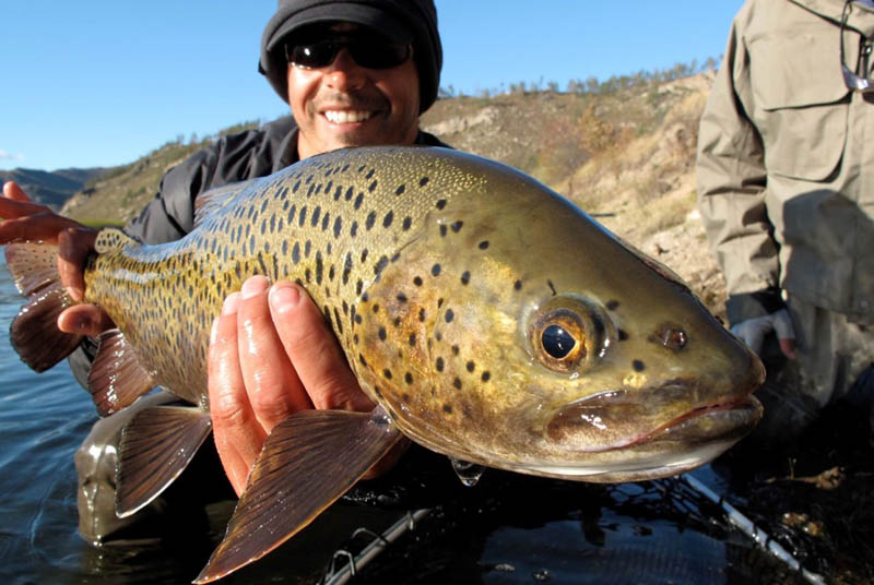 Mongolia Trout Fly Fishing